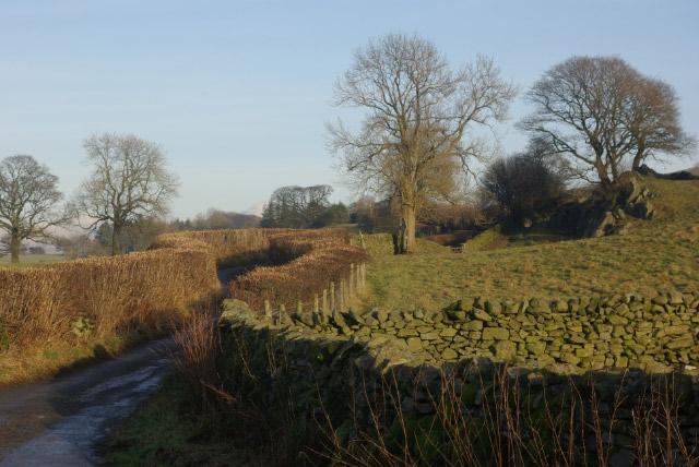 Lane near Haygarth