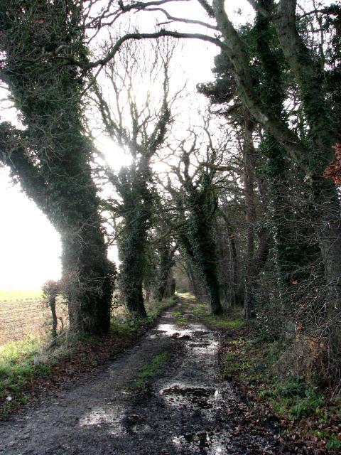 Footpath to Bodham Common
