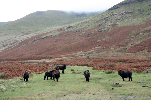 A herd of ponies near Roundhouse