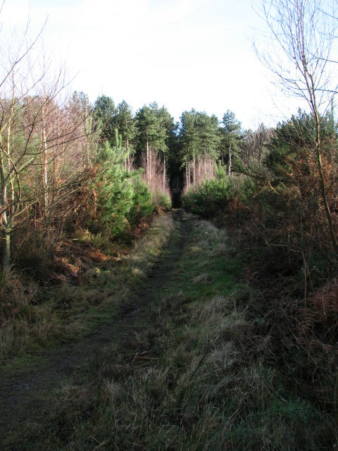 Footpath to Bodham Wood