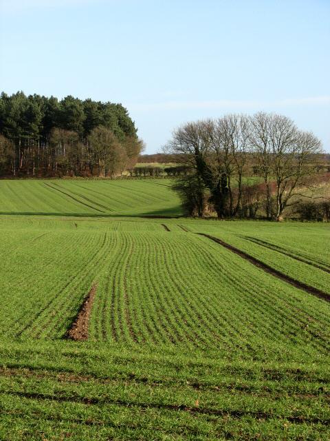 View east across field