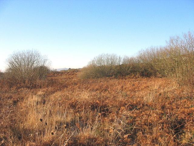 Infertile wasteland