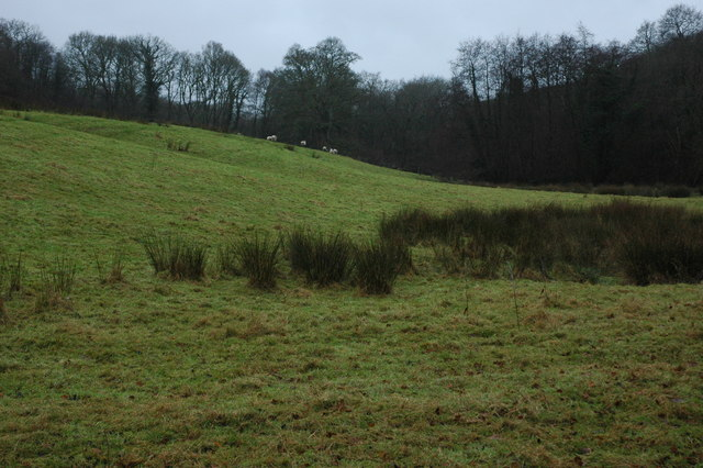 Sheep in a field at Odam Bridge
