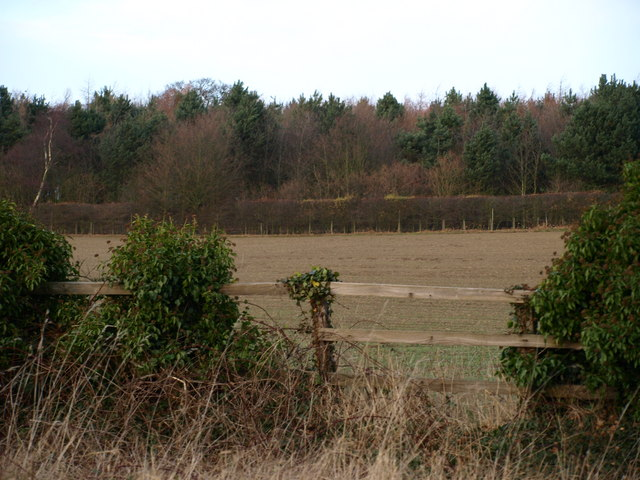 Fields and Trees