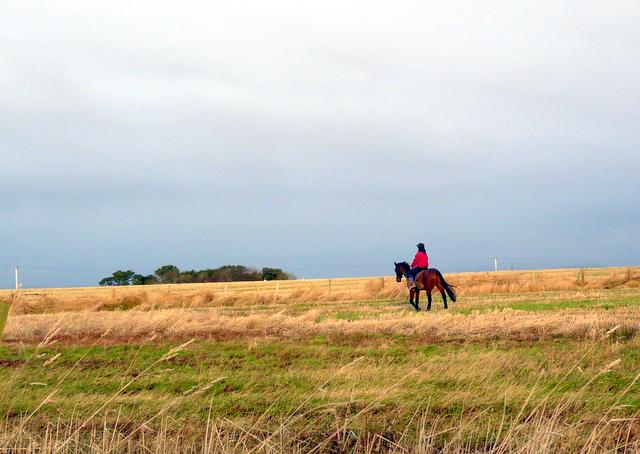 Rider Near Shandwick