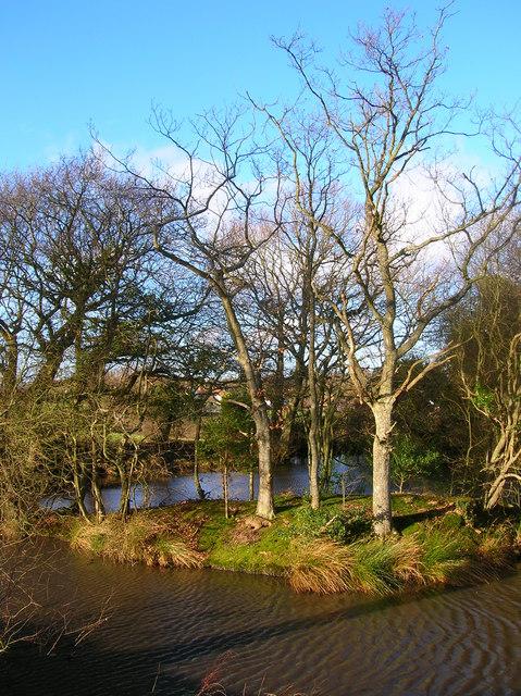 Pond near Toll Farm