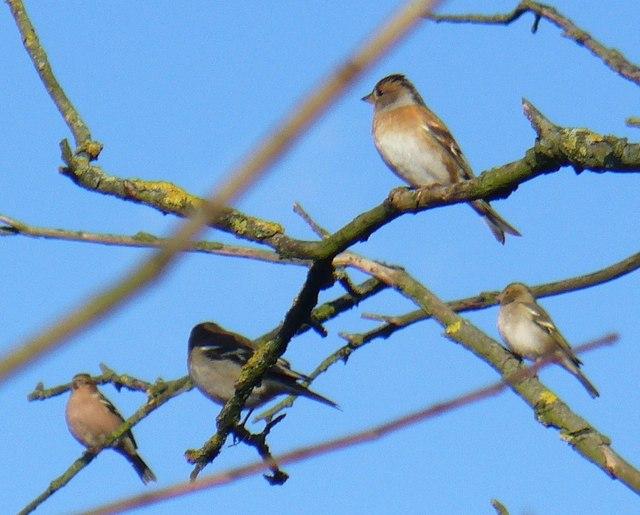 Birds Wintering by Pyrford