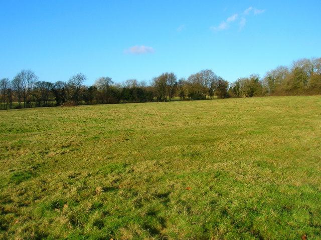 Field near Huglett's Stream