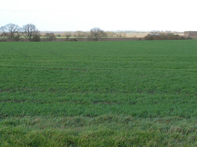 Edlington Fields