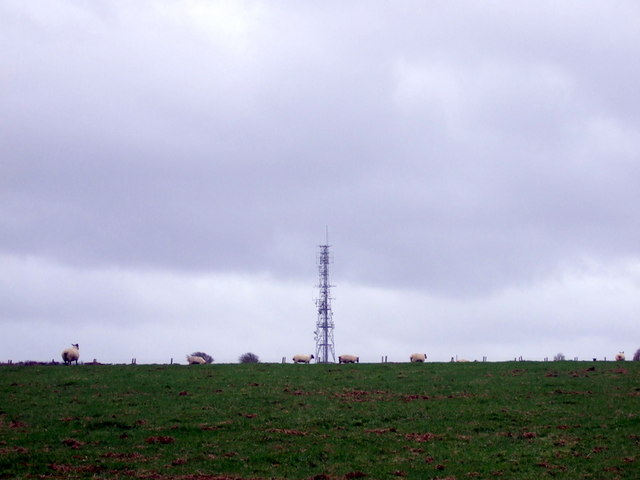 Mast with sheep