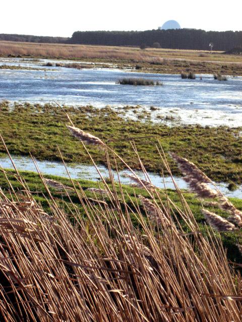 Flooded marshes on Minsmere Level