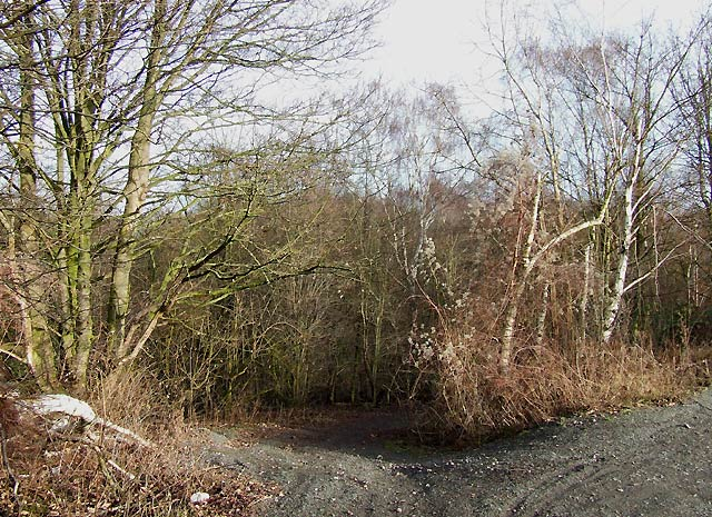 Track to the Clay Pits, near Kingswinford, Staffordshire