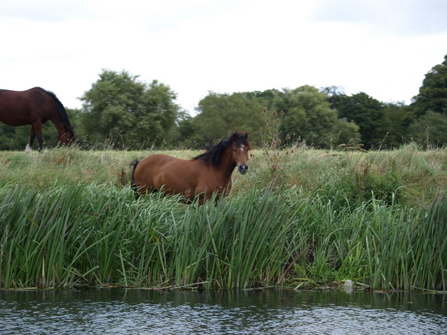 Horses grazing river banks
