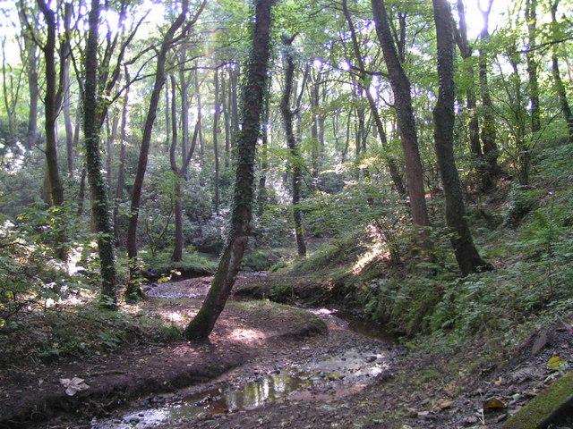 Stream through Plock Wood