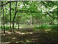TQ1834 : Footpaths in Graylands Plantation by Hugh Craddock