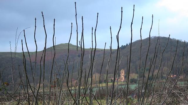 Ash Spears, Upper Welland