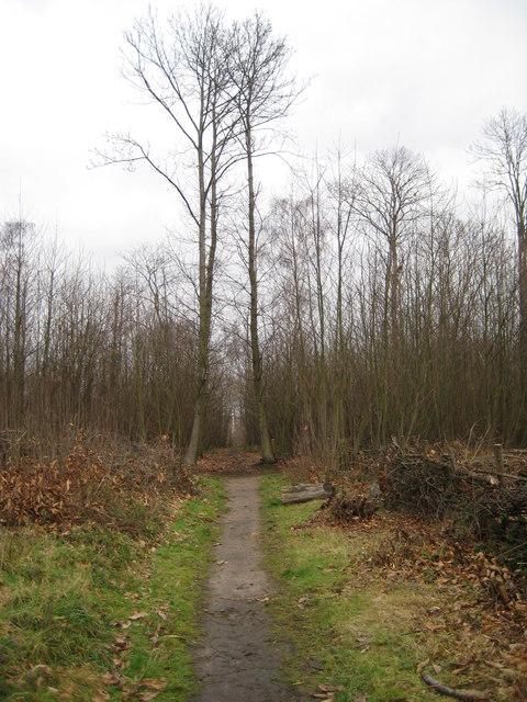 Footpath, Stavelarks Wood