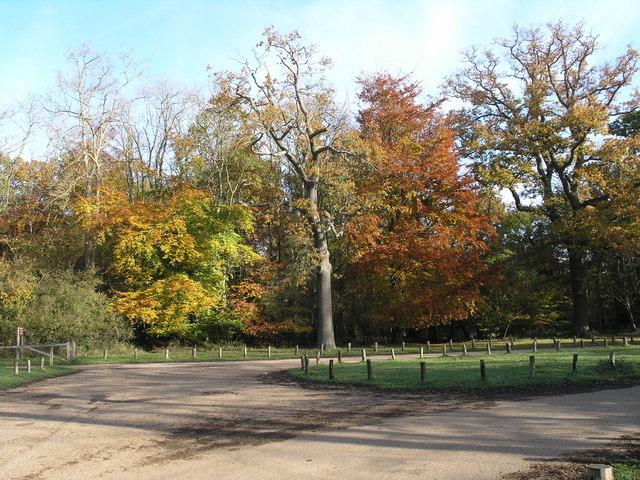 Autumn Colour at the Monument