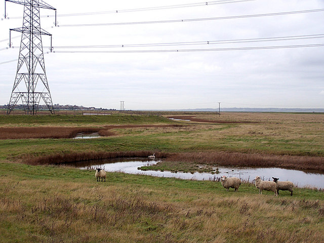 Local residents on Allhallows Marshes