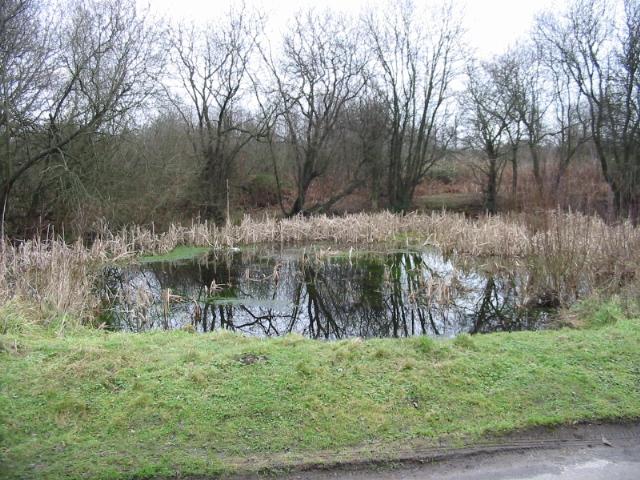 Pond at Gibbin's Brook
