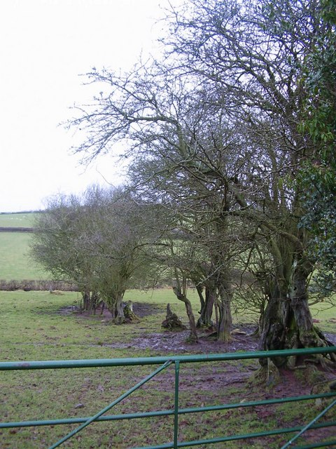Pasture with old hedge