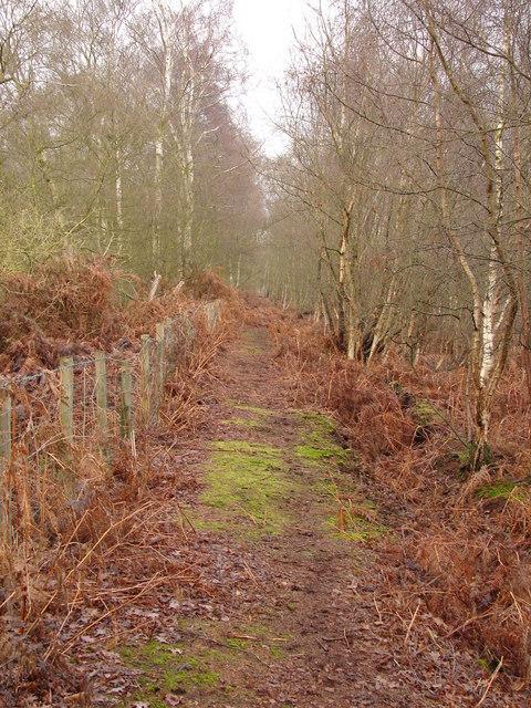 Footpath Through Humberhead Peatlands