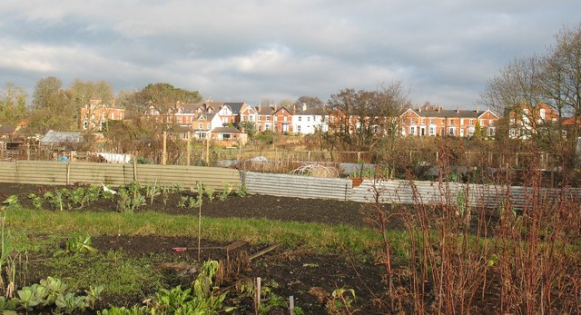 Allotments at Little Studley