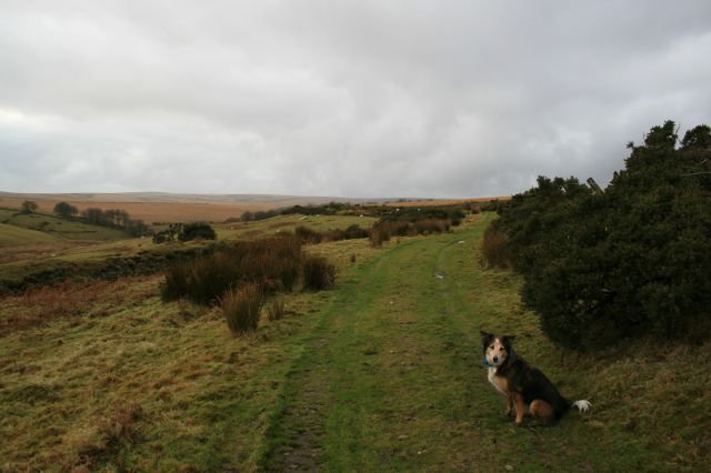 Above Long Combe
