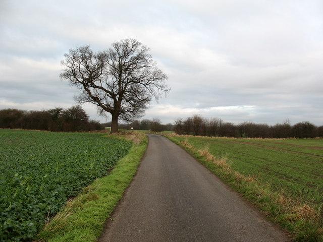 Farm road, Ripon Parks