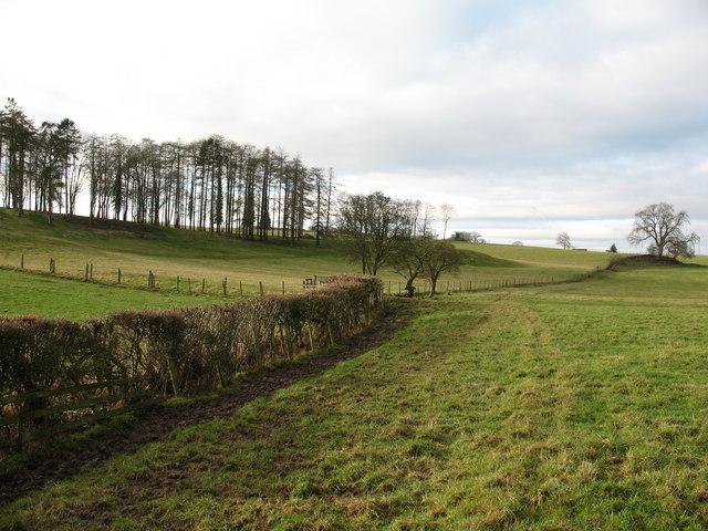 Bridleway near Fisher Wood