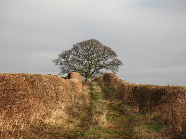 Green track and bridleway near Sutton Grange