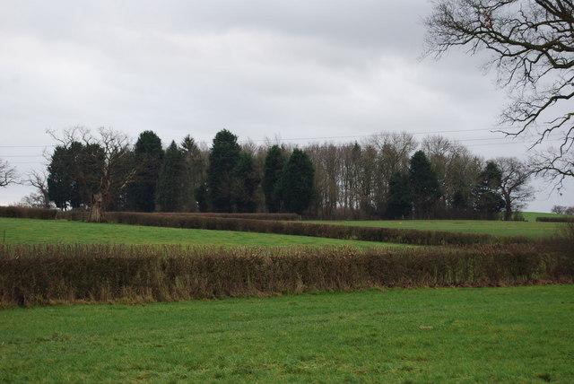 Mixed species plantation