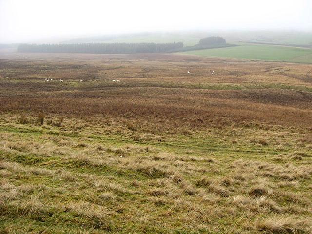 Rough grazing west of Easterknowe Head
