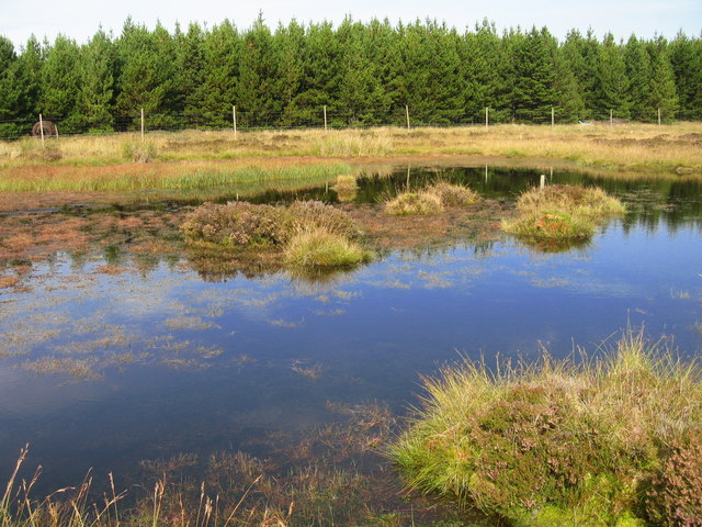 Lochan at edge of forestry
