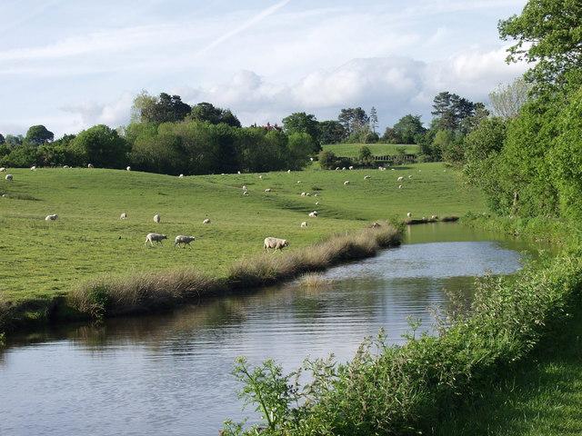 Grazings beside the Llangollen Canal