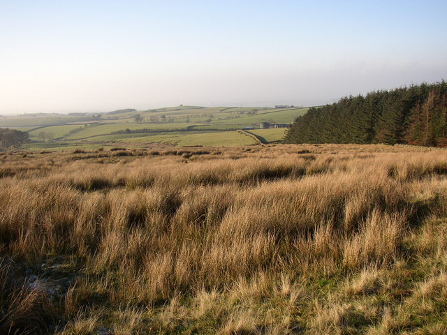 Moorland and conifer plantation, Quernmore