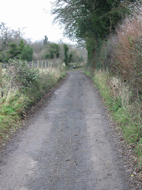View along lane near Well Wood