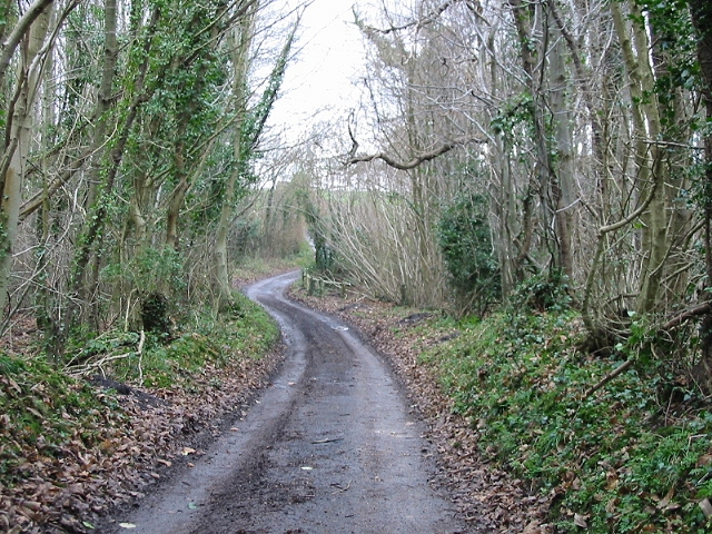 Pond Lane in Well Wood