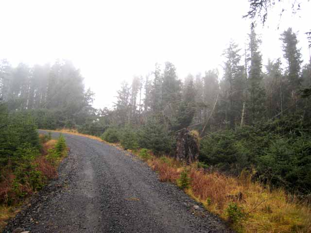 Forest road in Scotch mist
