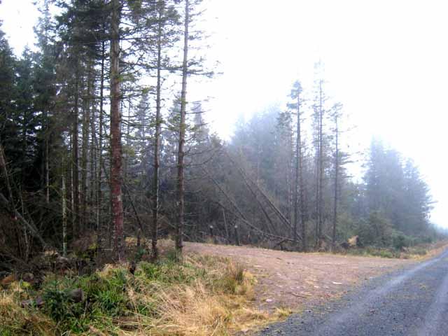 Forest layby near Greyhound Law