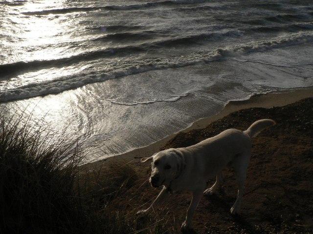 Hengistbury Head: on edge