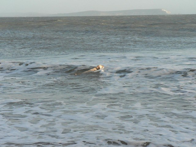 Hengistbury Head: dog and polar bear