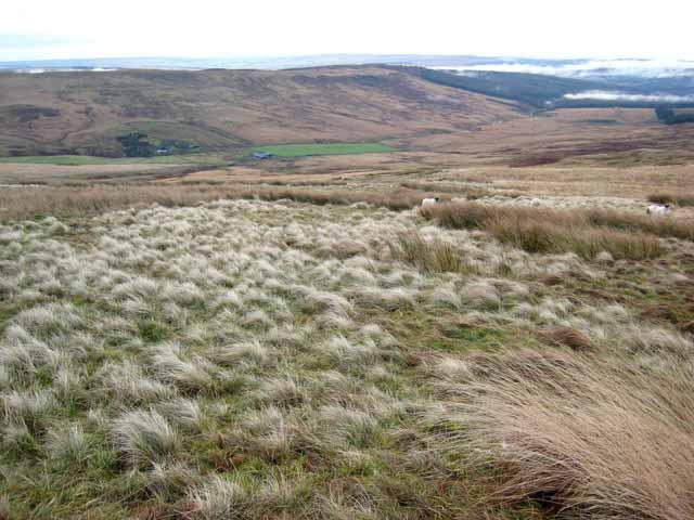 South-eastern slopes of Ravens Knowe