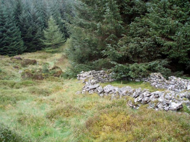 Sheepfold at edge of forest track