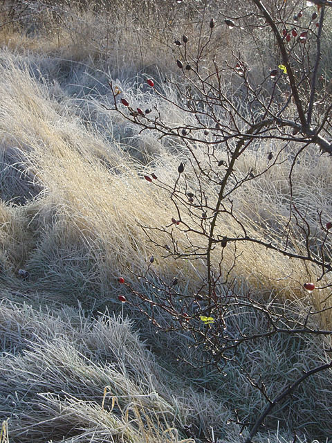Frost and thorns