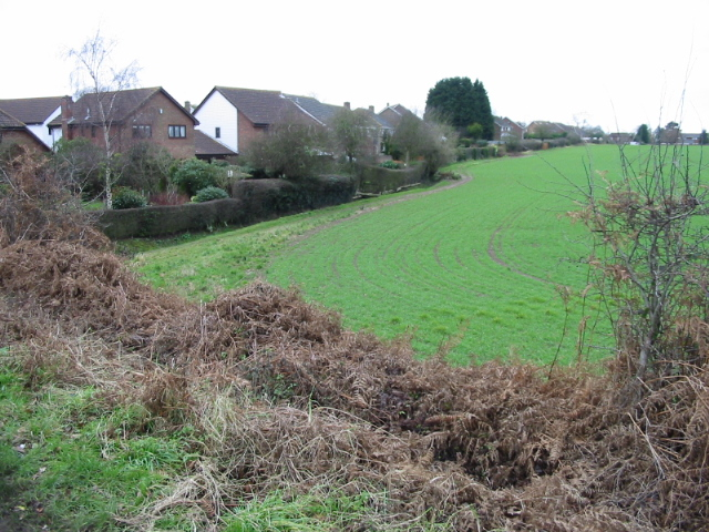 Field margin and footpath, Brabourne Lees