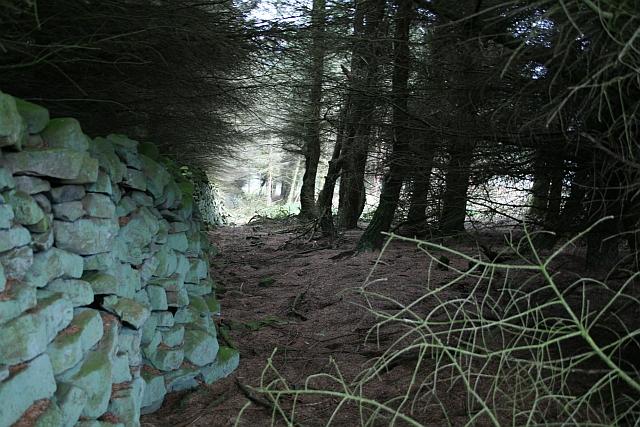 Small Plantation on Fleensop Moor (2)