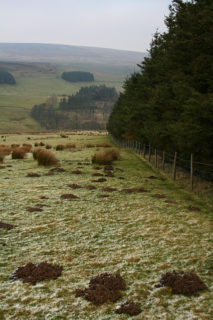 Plantation Boundary on Fleensop Moor.