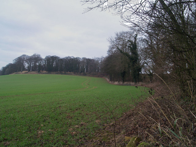 Field side off Watchley Lane