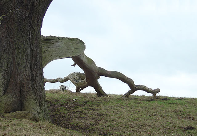 Tree with fallen branch